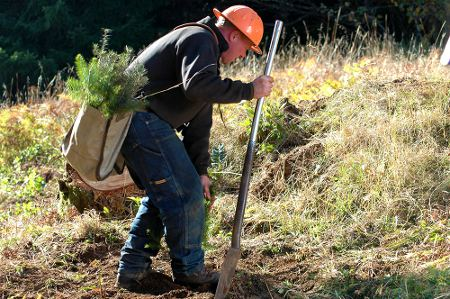 Replanting an Oregon Forest